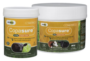 Copasure Cattle