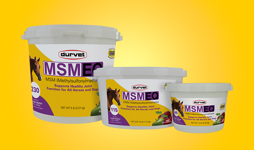 MSM EQ Product Spotlight